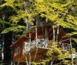 Harmonie - Casa din Copac