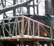 Harmonie - Casa din Copac Predeal